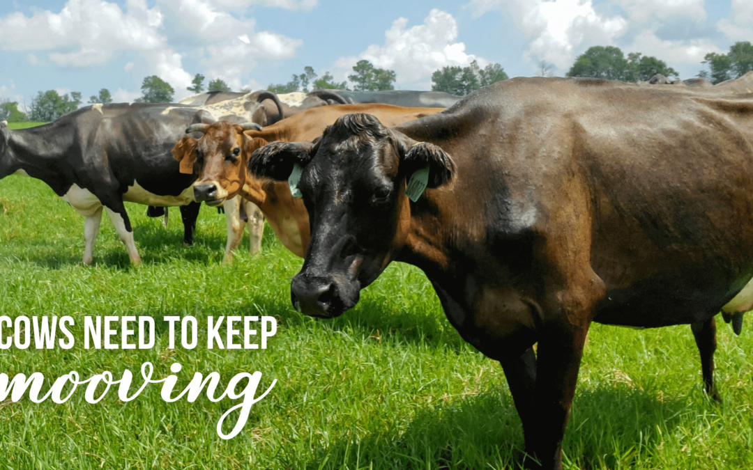 Cows Need to Keep Mooving for a Happier, Healthier Life Too