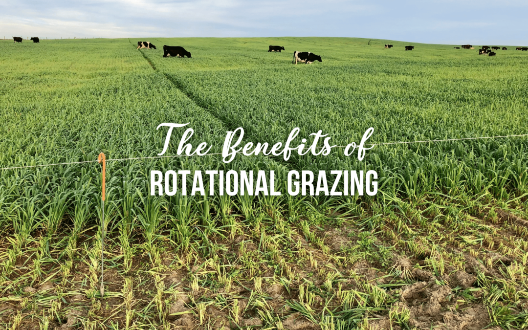 The Benefits of Rotational Grazing